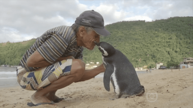 ad199230264a-penguin-called-2