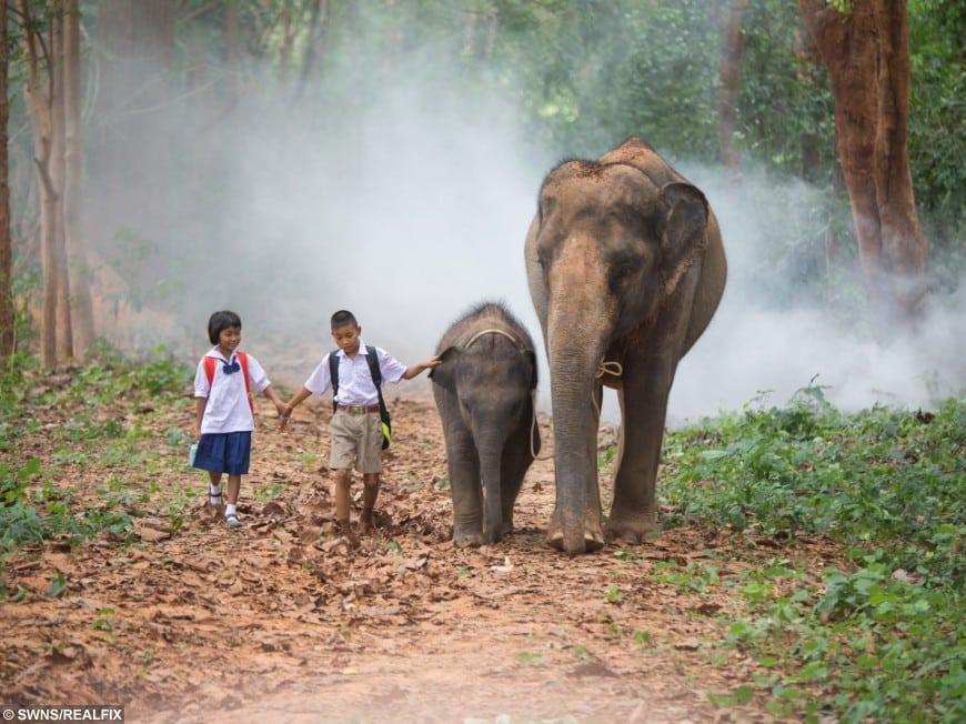 swns_elephant_walk_01-870x652