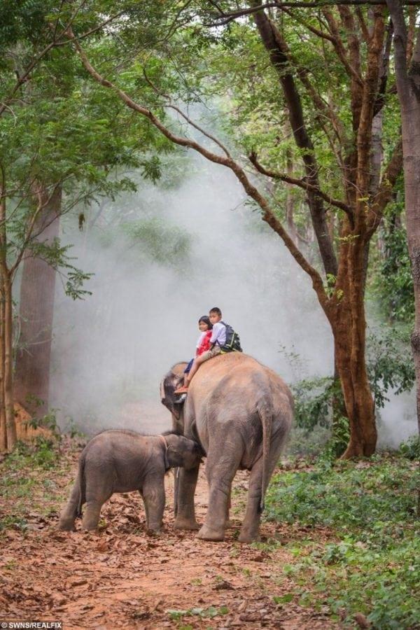 swns_elephant_walk_07-750x1125