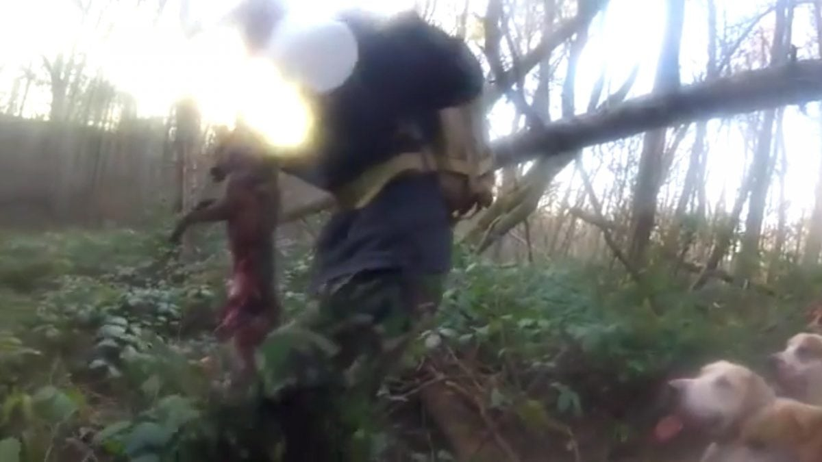 Video showing the Old Surrey Burstow & West Kent Hunt near Tunbridge Wells, Kent who supposedly killing a fox. See National copy NNHUNT: Animal rights activists claim they have recorded a fox being illegally hunted and killed by members of a hunt. The video appears to show a pack of dogs attacking a fox in woodland, before the fox is then removed from the hounds by a member of the Hunt Saboteurs Association. They have released a graphic video which appears to show hounds ripping a fox apart and disturbing images they say are of the dead animal with its insides hanging out.