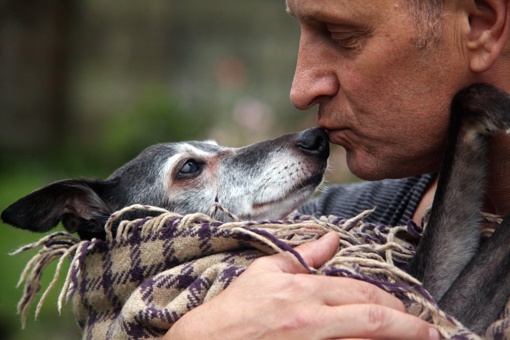Mark Woods with Walnut the whippet on his last day. A bid has been launched to raise £10k to build a statue to remember Walnut the Whippet on the beach where hundreds joined the poorly pooch for his final walk. The 18-year-old pet captured the hearts of the nation after his owner Mark Woods posted an appeal for dogs and their owners to join him one last time. Mark, 53, of Newquay, Cornwall, who launched the #walkwithwalnut appeal on social media, said he had been overwhelmed by the response from across the world. And some of his many supporters have now launched a campaign for a permanent statue at Porth beach where dog walkers from across the country gathered on Saturdaymorning for Walnut's emotional last stroll.