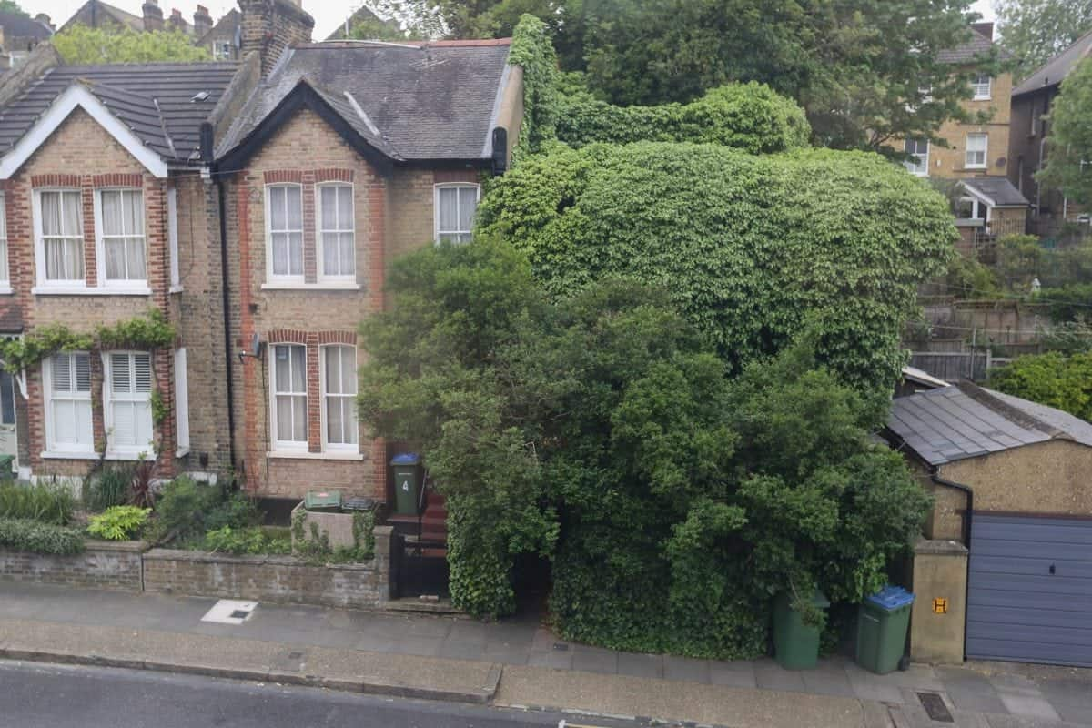 Derelict terrace swamped by overgrown trees sells for half for Terrace trees