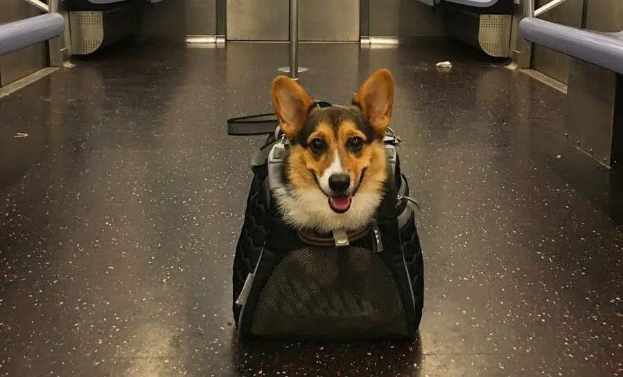 Good Dog Trains Bag Dog