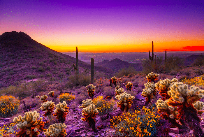 Things to do in Scottsdale, visit the Sonoran Desert