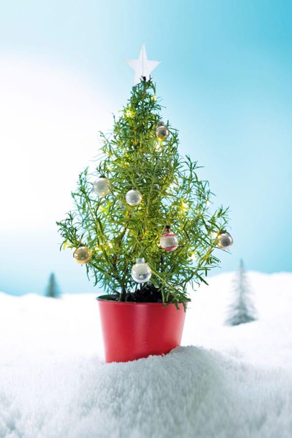 Real Christmas Trees London