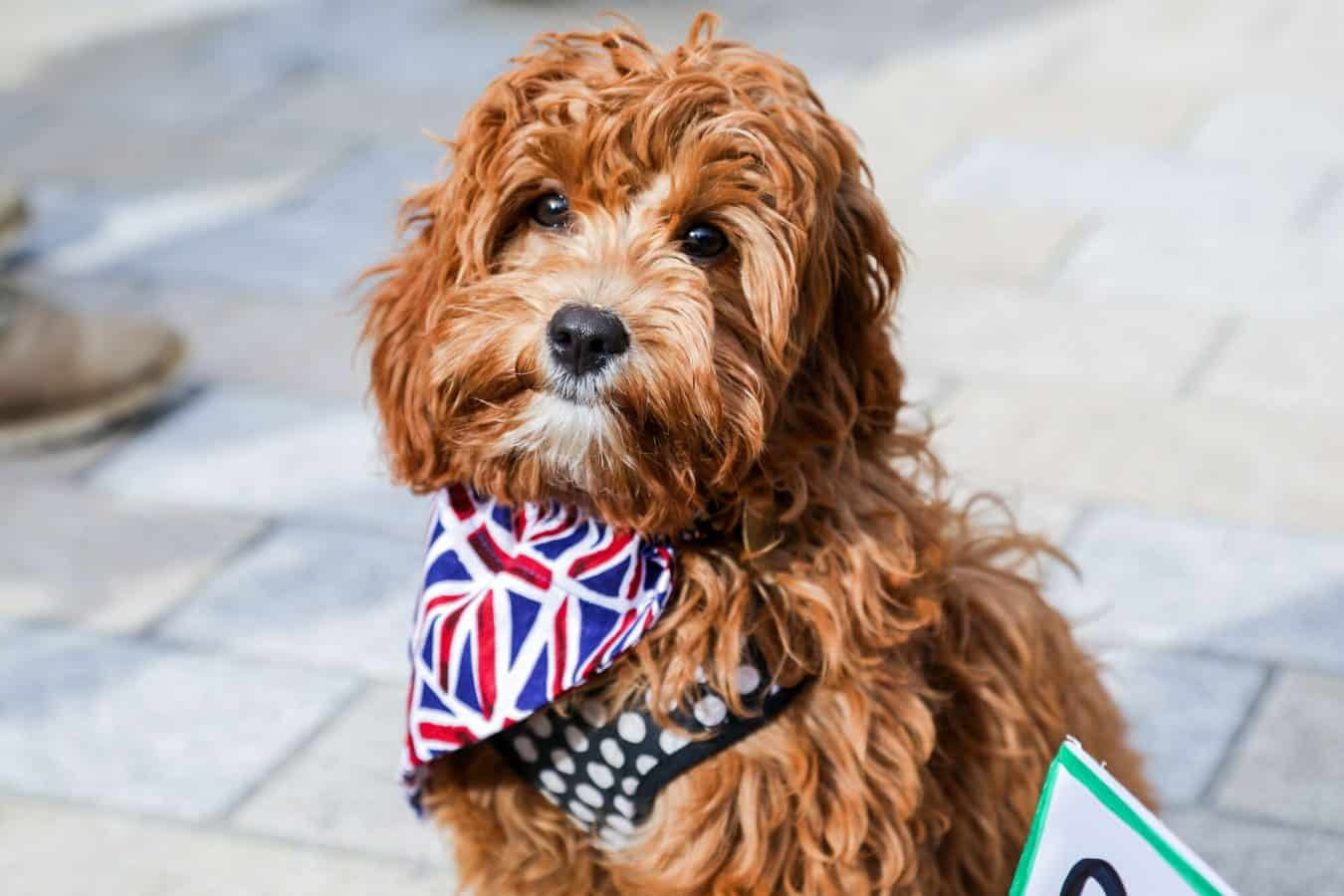 (c) Phil Watson / Wooferendum campaign